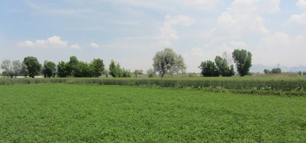 ده علت برای رفتن به سمت کشاورزی ارگانیک