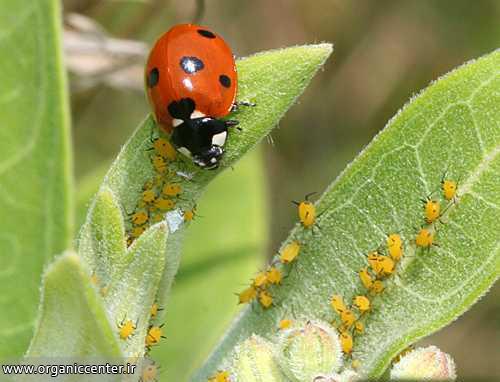 افزایش تنوع زیستی