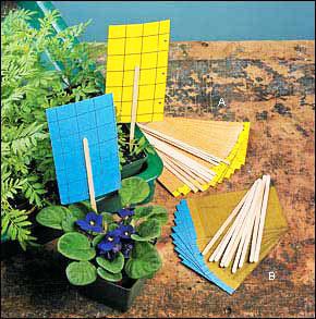 کارتها و نوارهای زرد و آبی