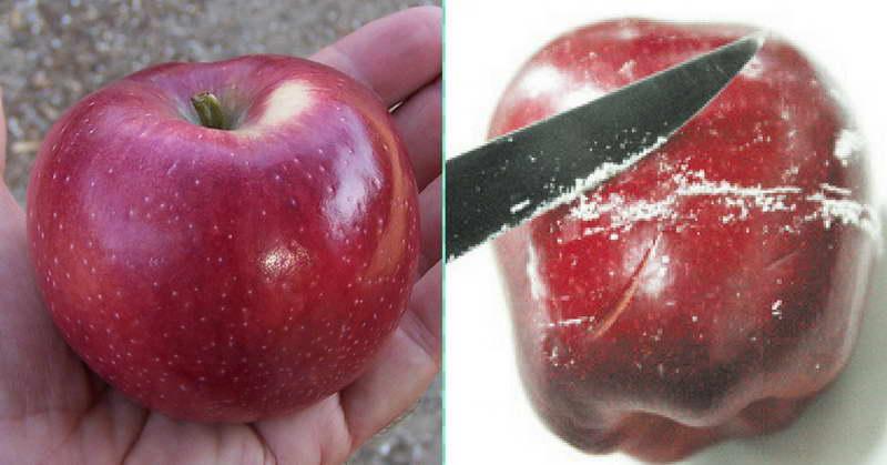 موم طبیعی بر روی سیب درختی