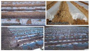 کاشت محصولات ارگانیک