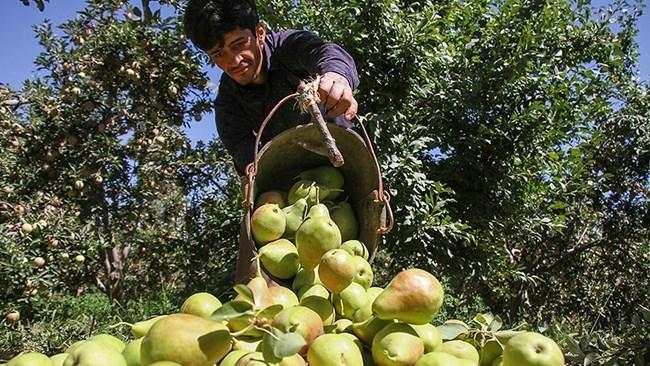 تولید محصولات کشاورزی ارگانیک