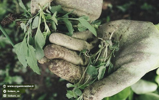 علف هرز ؛ گیاهی کشف نشده
